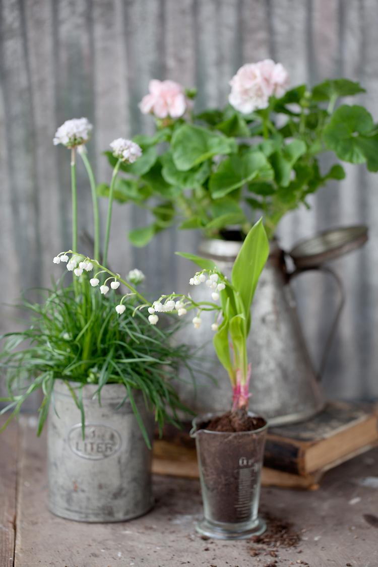 vita blommor i plåtkannor