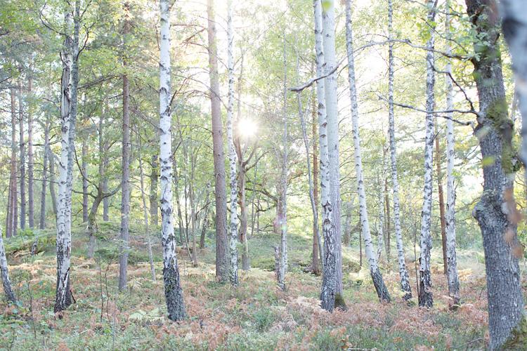björkskog och bröllopsfotografering Stockholm