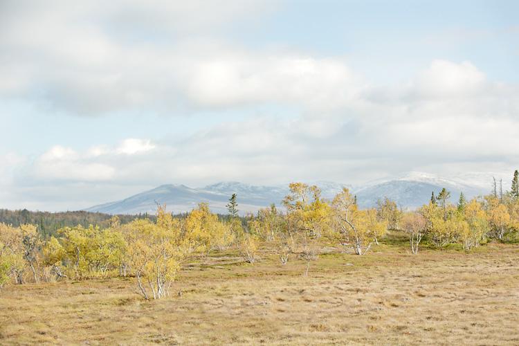 Jämtlandsfjällen höstbild med gula löv och blåa berg
