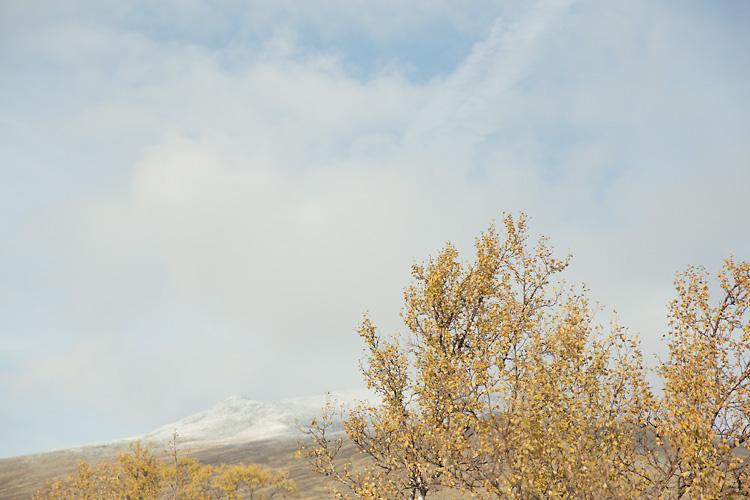 berg med snötopp och gula löv i förgrunden i Jämtland