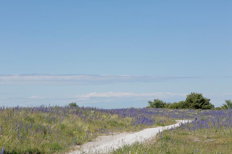 Blåeld Gotland