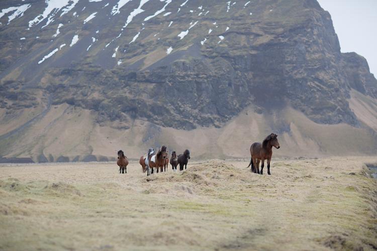 Häst i flock med berg i bakgrunden