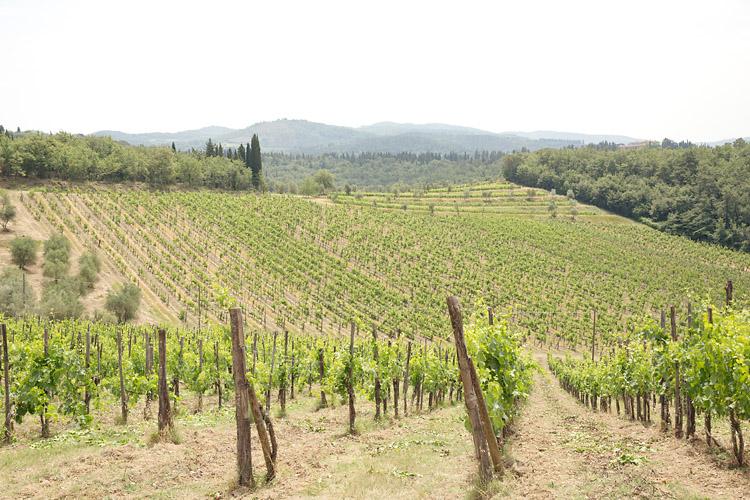 Vingård i Chianti