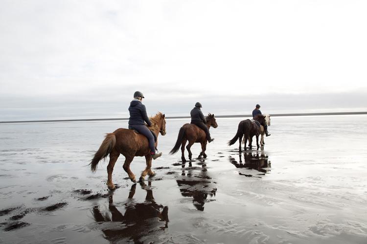 Fotograf Island fotograferar islandshästar