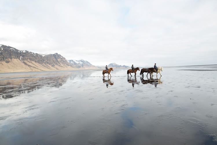 Fotograf Island rider islandshäst